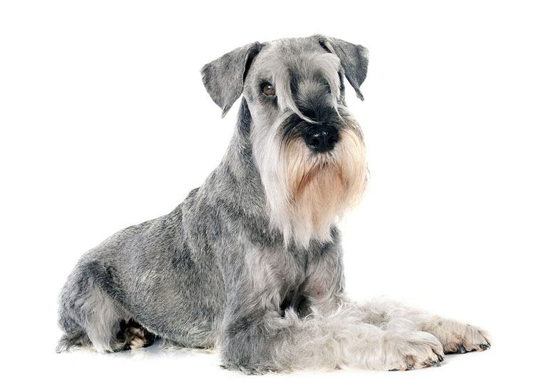 worst dog breeds for cats