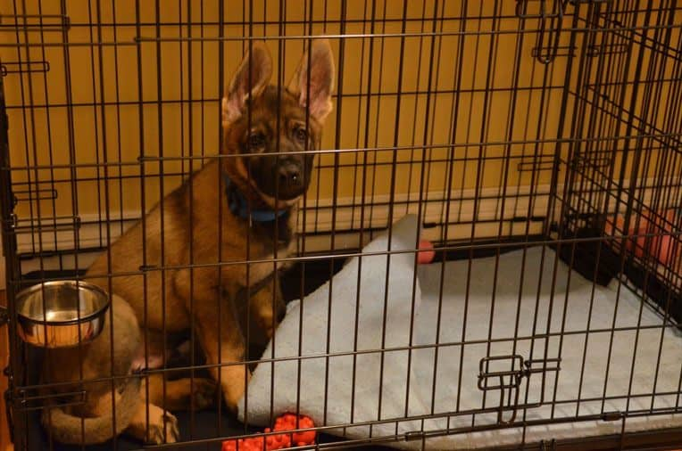how to stop a dog from peeing in crate