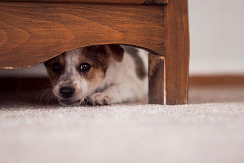 puppy fear periods