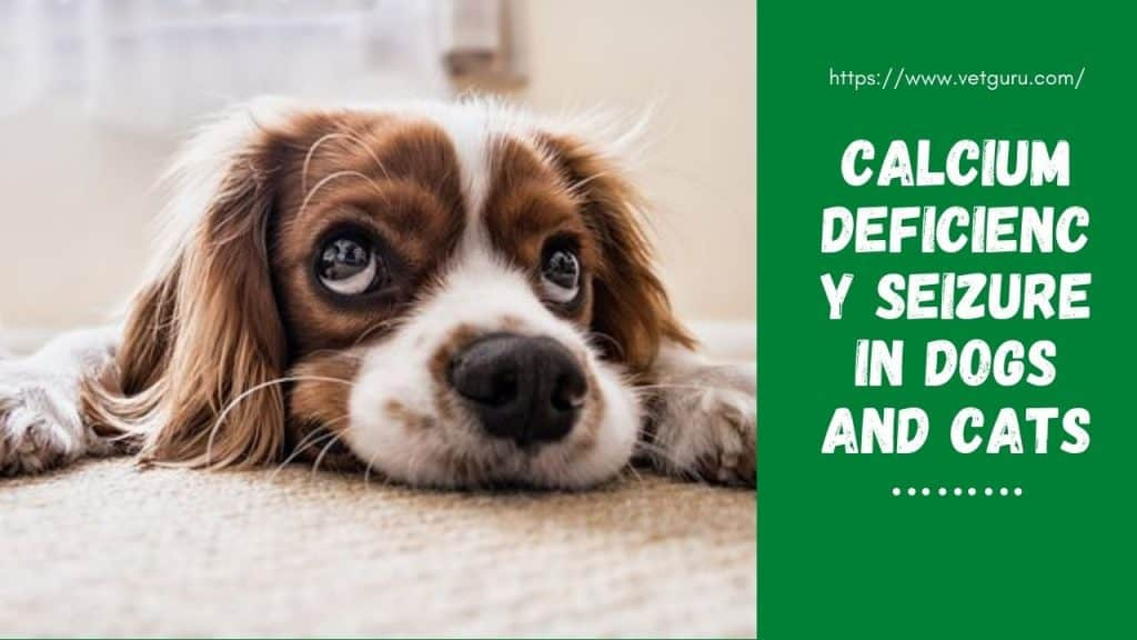 Calcium Deficiency Seizure in Dogs and Cats