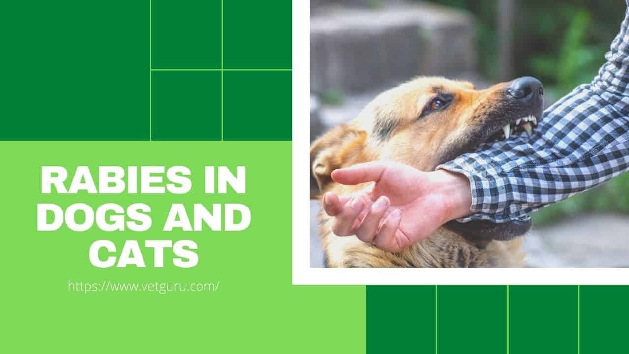 Rabies in Dogs and Cats