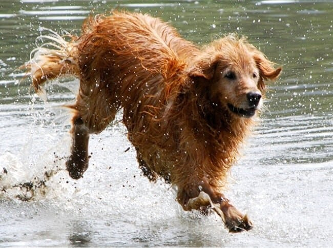 Bathing in dirty water causes eczema in dogs