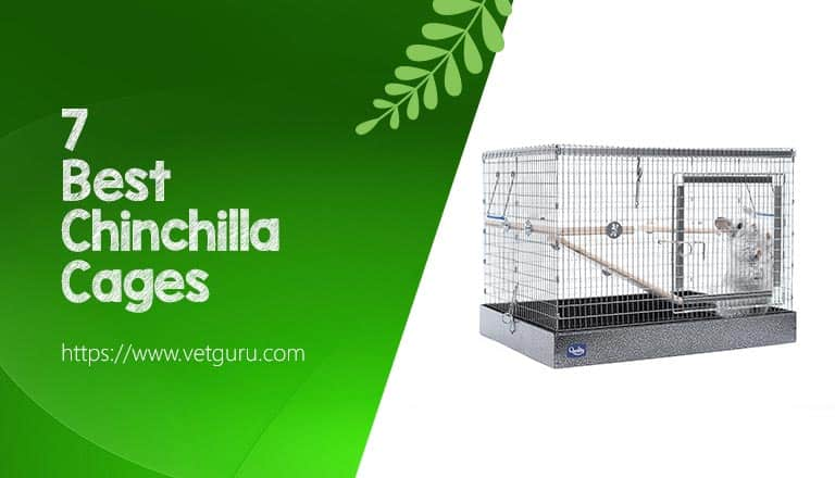 Best Chinchilla Cages