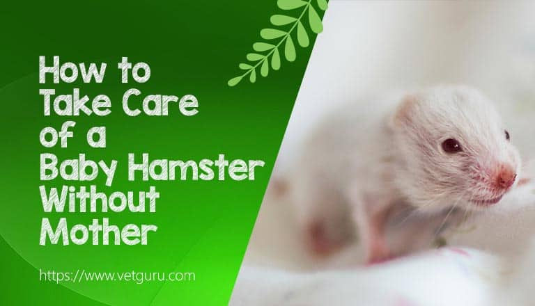 How to Take Care of a Baby Hamster Without Mother