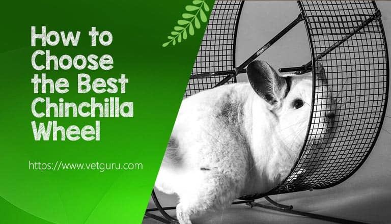 How to Choose the Best Chinchilla Wheel